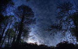 Forest night sky.jpg